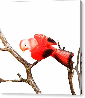 Vintage Red Bird Canvas Print