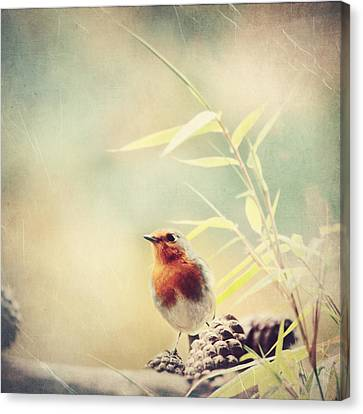 Vintage Robin 2 Canvas Print by Heike Hultsch
