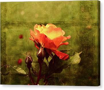 Vintage Rose Canvas Print by Bonnie Bruno
