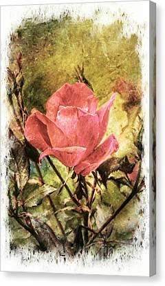 Vintage Rose Canvas Print by Tina  LeCour