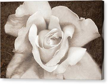 Canvas Print featuring the photograph Vintage Sepia Rose Flower by Jennie Marie Schell