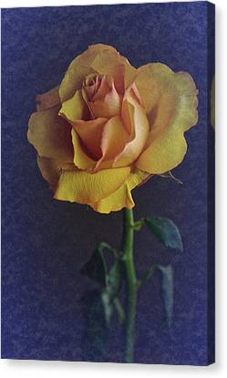 Canvas Print featuring the photograph Vintage Single Rose by Richard Cummings
