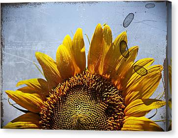 Vintage Sunflower- Fine Art Canvas Print by KayeCee Spain