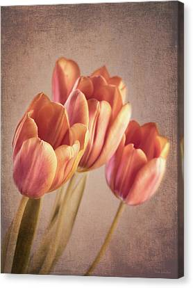 Vintage Tulips Canvas Print by Wim Lanclus