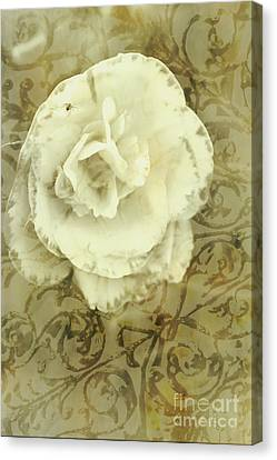 Brown Tones Canvas Print - Vintage White Flower Art by Jorgo Photography - Wall Art Gallery