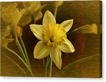 Canvas Print featuring the photograph Vintage Yellow Narcissus by Richard Cummings