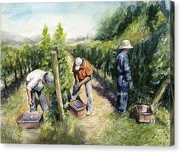 Vineyard Watercolor Canvas Print by Olga Shvartsur