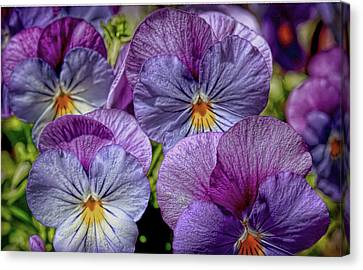 Canvas Print featuring the photograph Viola by Bonnie Willis
