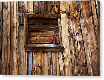 Viola In Window Canvas Print by Garry Gay