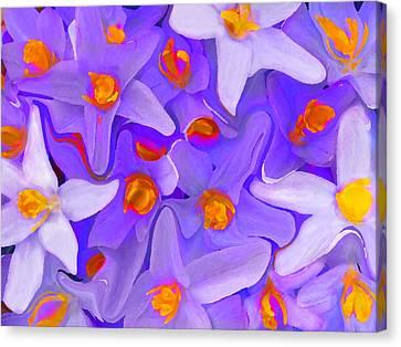 Viola Molti Canvas Print by Robert OP Parrish