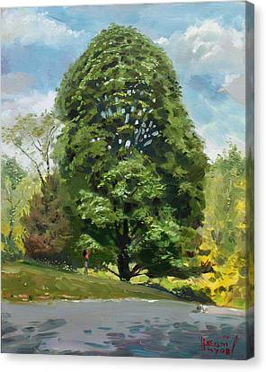 Viola S Tree Canvas Print by Ylli Haruni