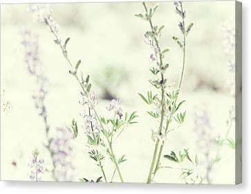 Violet And Green Bloom Canvas Print by Amyn Nasser