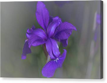 Violet Dream Canvas Print by Bruce Pritchett