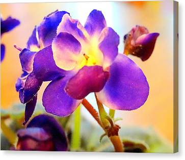 Violet In Bloom Canvas Print
