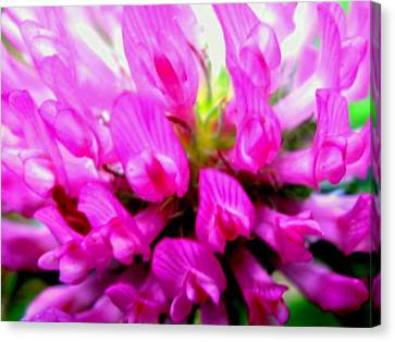 Violet Canvas Print by Molly McPherson