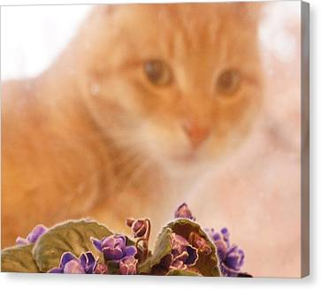 Violets With Cat Canvas Print