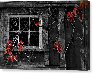 Virginia Creeper Canvas Print by Thomas Schoeller