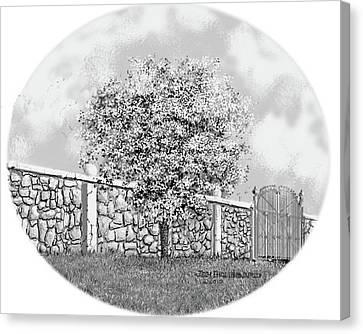 Virginia-dogwood Canvas Print