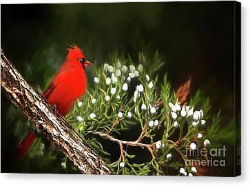Canvas Print featuring the photograph Virginia State Bird by Darren Fisher
