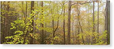 Virginia Woods Canvas Print