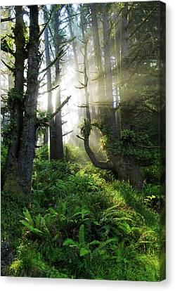 Canvas Print featuring the photograph Vision by Chad Dutson