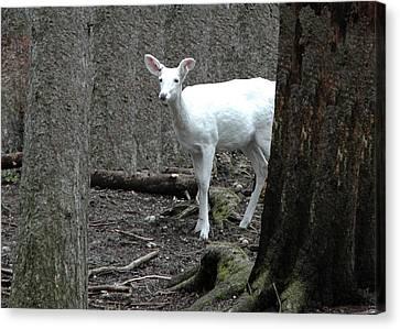 Canvas Print featuring the photograph Vision Quest White Deer by LeeAnn McLaneGoetz McLaneGoetzStudioLLCcom