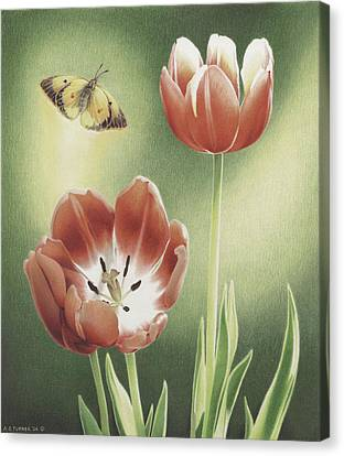 Visitation Canvas Print by Amy S Turner