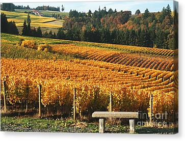 Visiting Wine Country Canvas Print by Margaret Hood