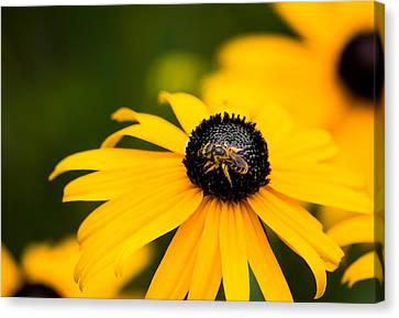 Visitor In The Garden Canvas Print by Shelby  Young