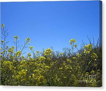 Vista Flores Canvas Print by Jim Thomson