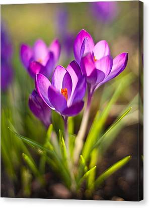 Vivid Petals Canvas Print by Mike Reid