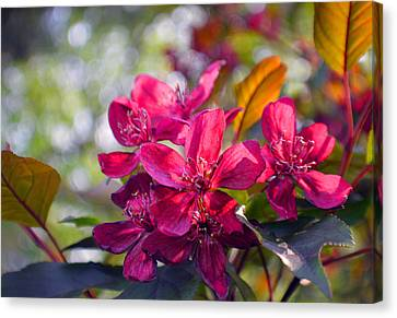 Vivid Pink Flowers Canvas Print by Tina M Wenger