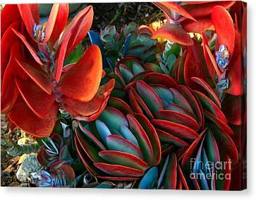 Vivid Paddle-leaf Succulent Canvas Print by Jean Clarke