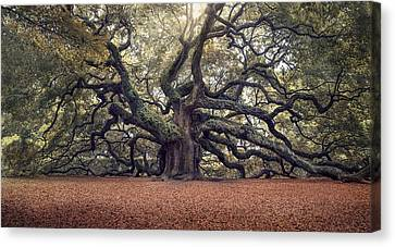 Live Oaks Canvas Print - Voices Of The Angels by Magda  Bognar