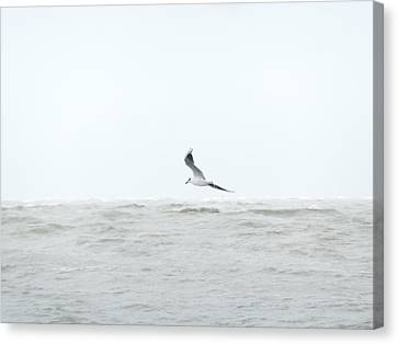 Canvas Print featuring the photograph Vol Sur Mer Agitee by Marc Philippe Joly