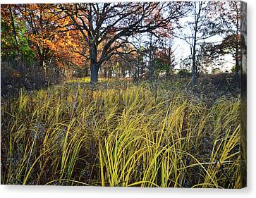 Canvas Print featuring the photograph Volo Bog Fall Morning by Ray Mathis