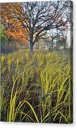 Canvas Print featuring the photograph Volo Bog Natural Area by Ray Mathis