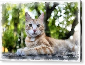 Volterra Italy Cat Watercolor Canvas Print