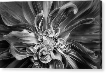 Vortex Canvas Print by Mary Jo Allen
