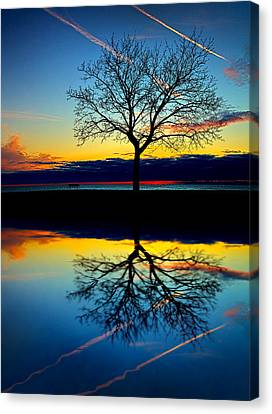 Vows Canvas Print by Phil Koch