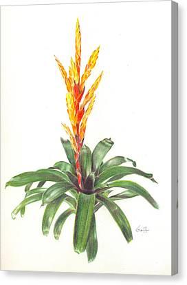 Vriesea 'dreamcicle Orange' Canvas Print