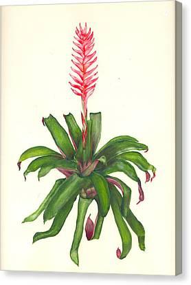 Vriesea Hybrid Canvas Print