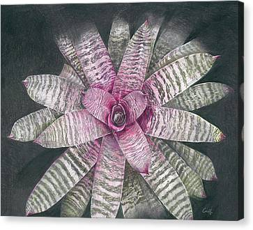 Vriesea Memoria Howard Yamamoto Canvas Print
