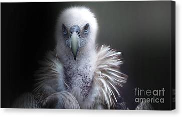 Canvas Print featuring the photograph Vulture 2 by Christine Sponchia
