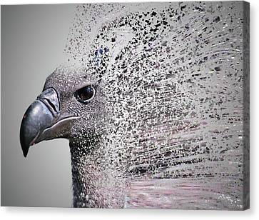 Condor Canvas Print - Vulture Break Up by Martin Newman