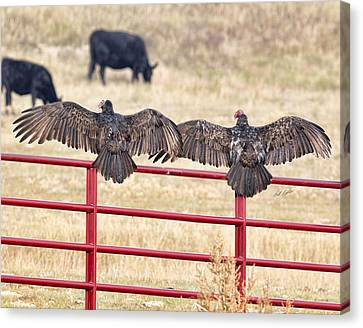 Canvas Print featuring the photograph Vulture Overlap by Bill Kesler