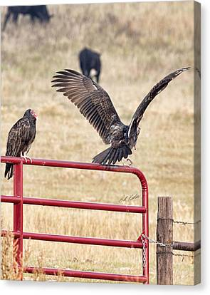 Canvas Print featuring the photograph Vulture Vee by Bill Kesler