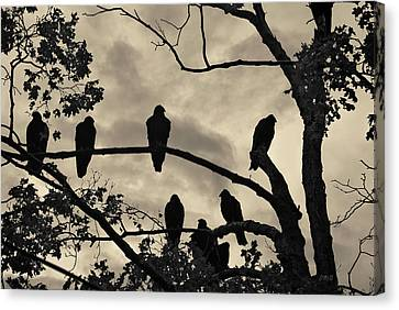 Buzzard Canvas Print - Vultures And Cloudy Sky by David Gordon