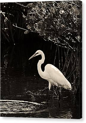 Wading For Food Canvas Print by Ron Dubin