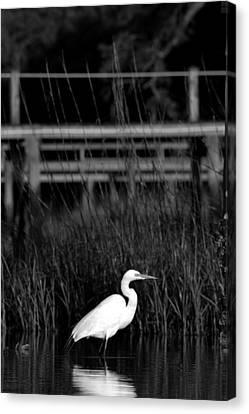 Wading Heron Canvas Print by Tom Rickborn
